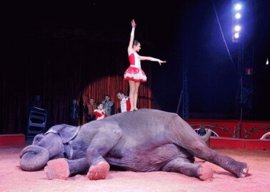 Join Rosanna Davison and Urge Dublin to Ban Wild-Animal Circuses
