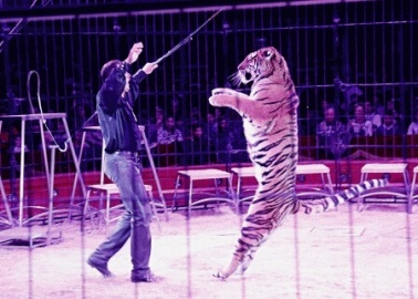 Sir Roger Moore to PM: The Day Has Come to Ban Animal Circuses