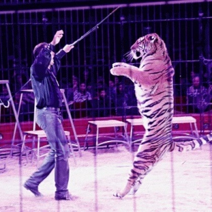 Ask Theresa May to Ban Cruel Wild-Animal Circuses!