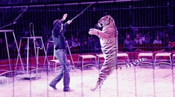 Ask Theresa May to Ban Cruel Wild-Animal Circuses!
