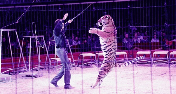Help Ban Cruel Wild-Animal Circuses