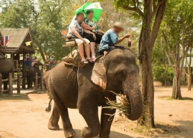 Another Travel Agency Cuts Ties With Cruel Elephant Treks!