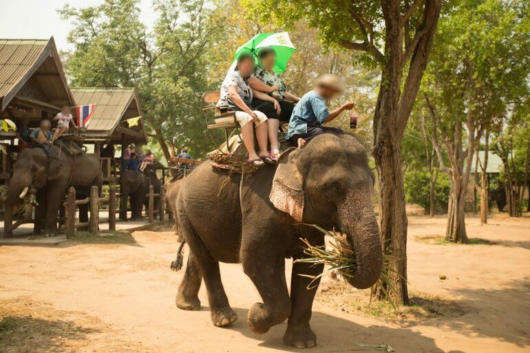 Elephant Trek Ride Tourist