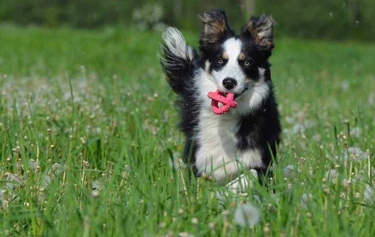 Dog Happe Summer Running