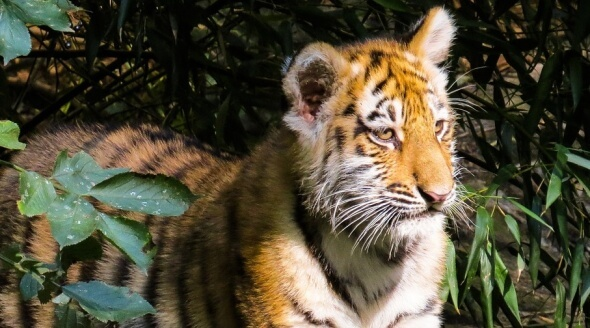 VICTORY: Dublin Council Votes to Ban Wild-Animal Circuses