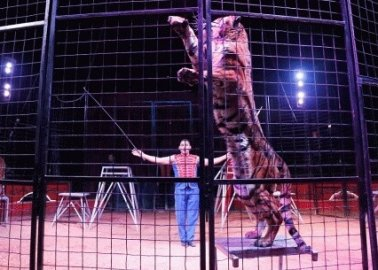 Could Larry the Cat 'Purrsuade' Theresa May to Get Big Cats Out of Circuses?