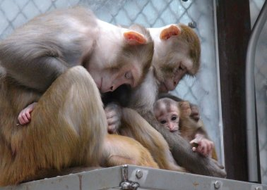 Ask the European Union to End Experiments on Primates