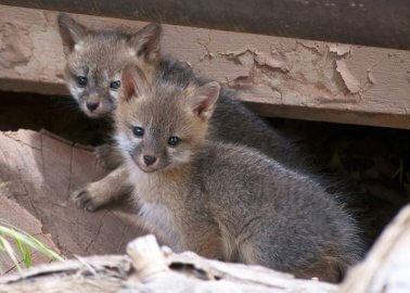 VICTORY: The Kooples Breaks Up With Fur!