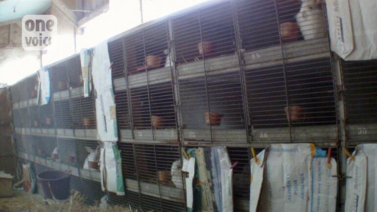 one-voice-angora-cages