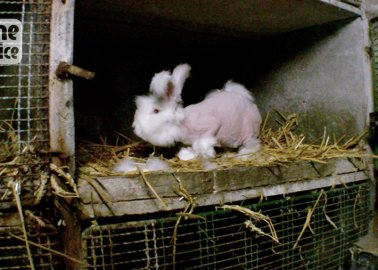 You'll Never Be Able to Forget These Rabbits' Screams