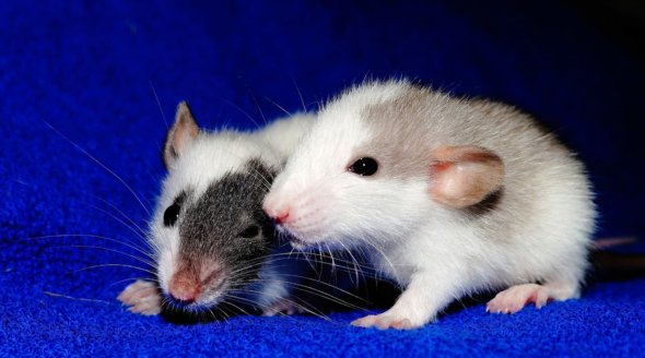 Poll Shows Overwhelming Public Support for Non-Animal Research