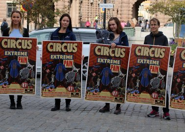 20,000 More People Call on Sweden to End Delay and Ban Wild Animals in Circuses