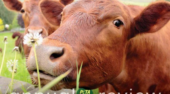 annual-review-petauk-2015-cover