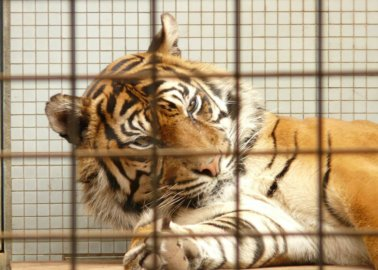It's Time for Theresa May to Take Action on Circuses