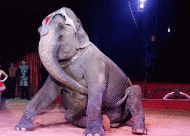 Tim Burton's 'Dumbo' Highlights Circus Cruelty