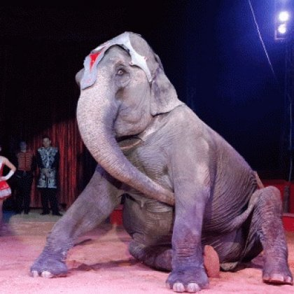 Tell Ireland to Ban Wild-Animal Circuses!