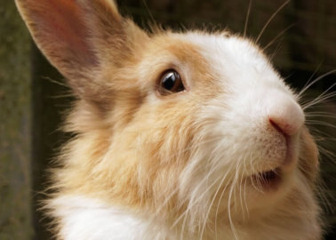 Hundreds of Animals Saved After Appeal Ruling Agrees With PETA Scientists