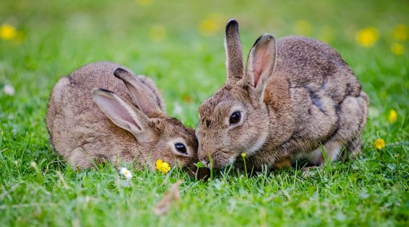 VICTORY! Horrific Staffordshire Rabbit Farm Rejected
