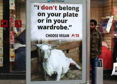 These Billboards Show How Sheep Are Treated in the Wool Industry