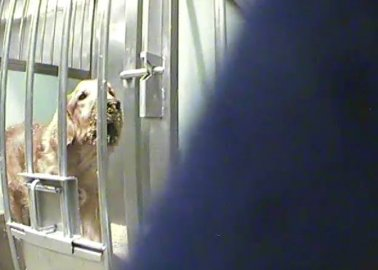 Urge Téléthon to Stop Funding Cruel Experiments on Dogs!