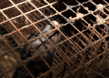 Harvey Nichols Needs to Stop Pretending the Fur It Sells Comes From Animals Who Were 'Treated Well'
