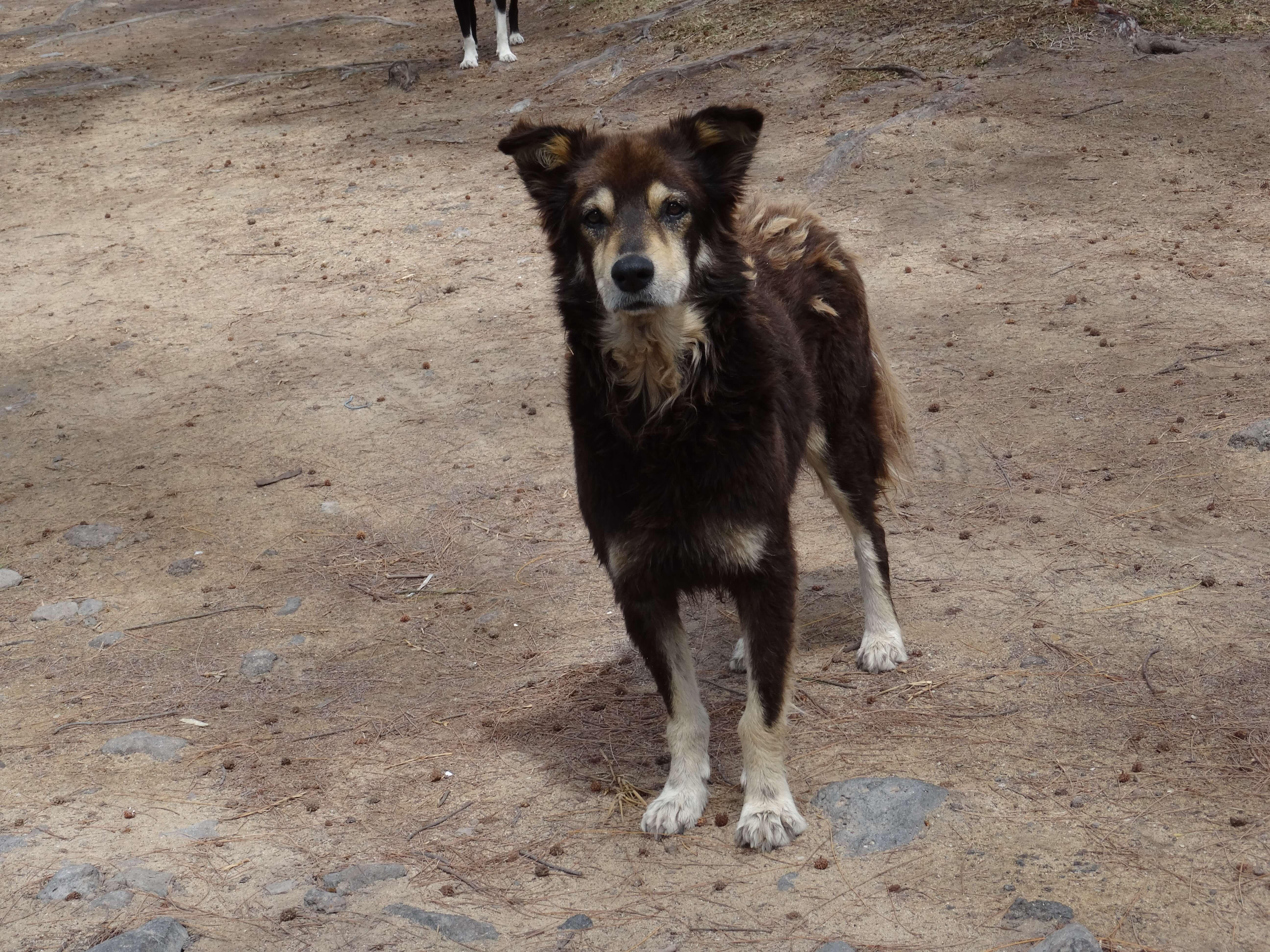 mauritius-dogs-closeup