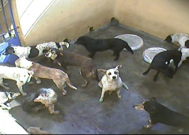 WATCH: Dogs Cruelly Killed on So-Called 'Paradise Island'