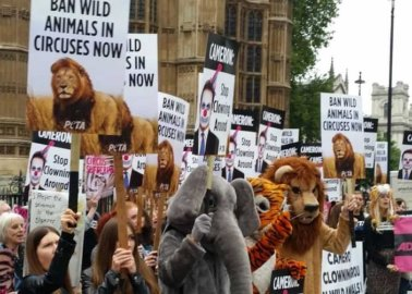 Finally! Government Introduces Bill to Ban Use of Wild Animals in Circuses in England