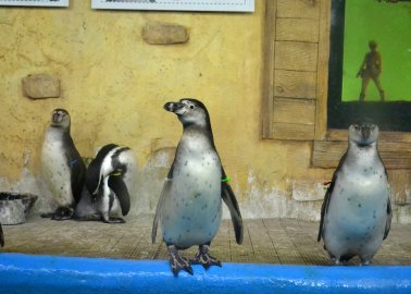 Idlewells: Penguins Do NOT Belong in a Shopping Centre