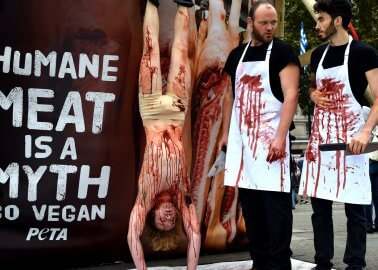 PHOTOS: Open-Air 'Slaughterhouse' in Central London Marks World Vegan Day