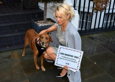 Pamela Anderson Delivers the Pleas of Thousands to Mauritius' High Commission