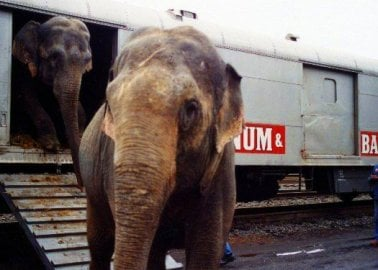 It's Over for Ringling Bros. Circus