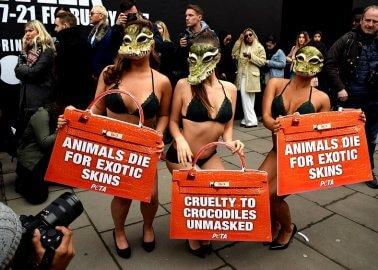 'Crocodile' Victims Crash Fashion Week Events