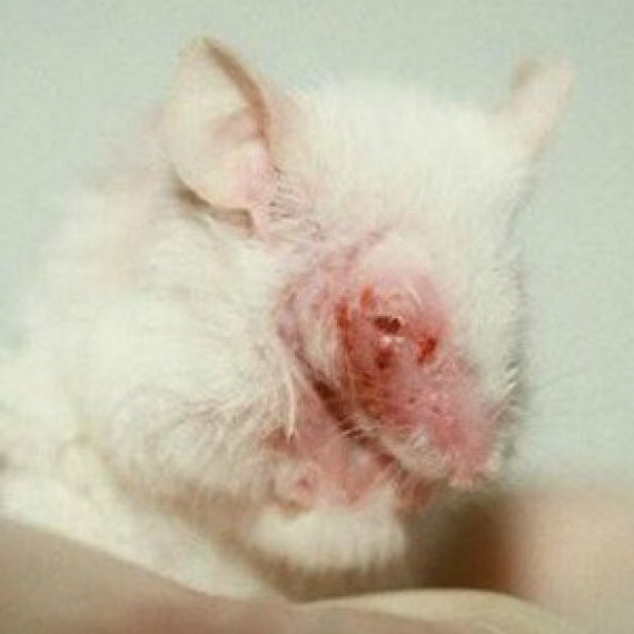 Health Charities: Are They Spending Your Money on Animal Testing?