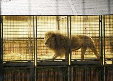 Scotland Bans Wild-Animal Circuses
