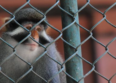 Nearly 500 Animals Dead in 4 Years at Horrific Cumbria Zoo
