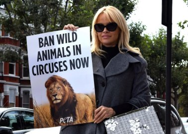 Pamela Anderson Urges Taoiseach Enda Kenny to Support Ban on Wild-Animal Circuses in Ireland