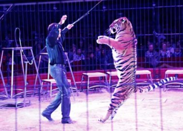 These 27 Countries Have Banned Wild-Animal Circuses!
