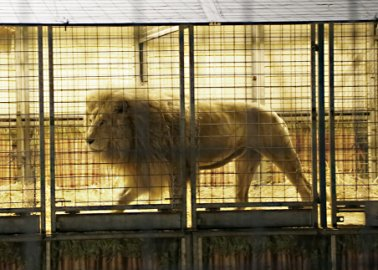 Tory MP Continues to Block Ban on Wild-Animal Circuses