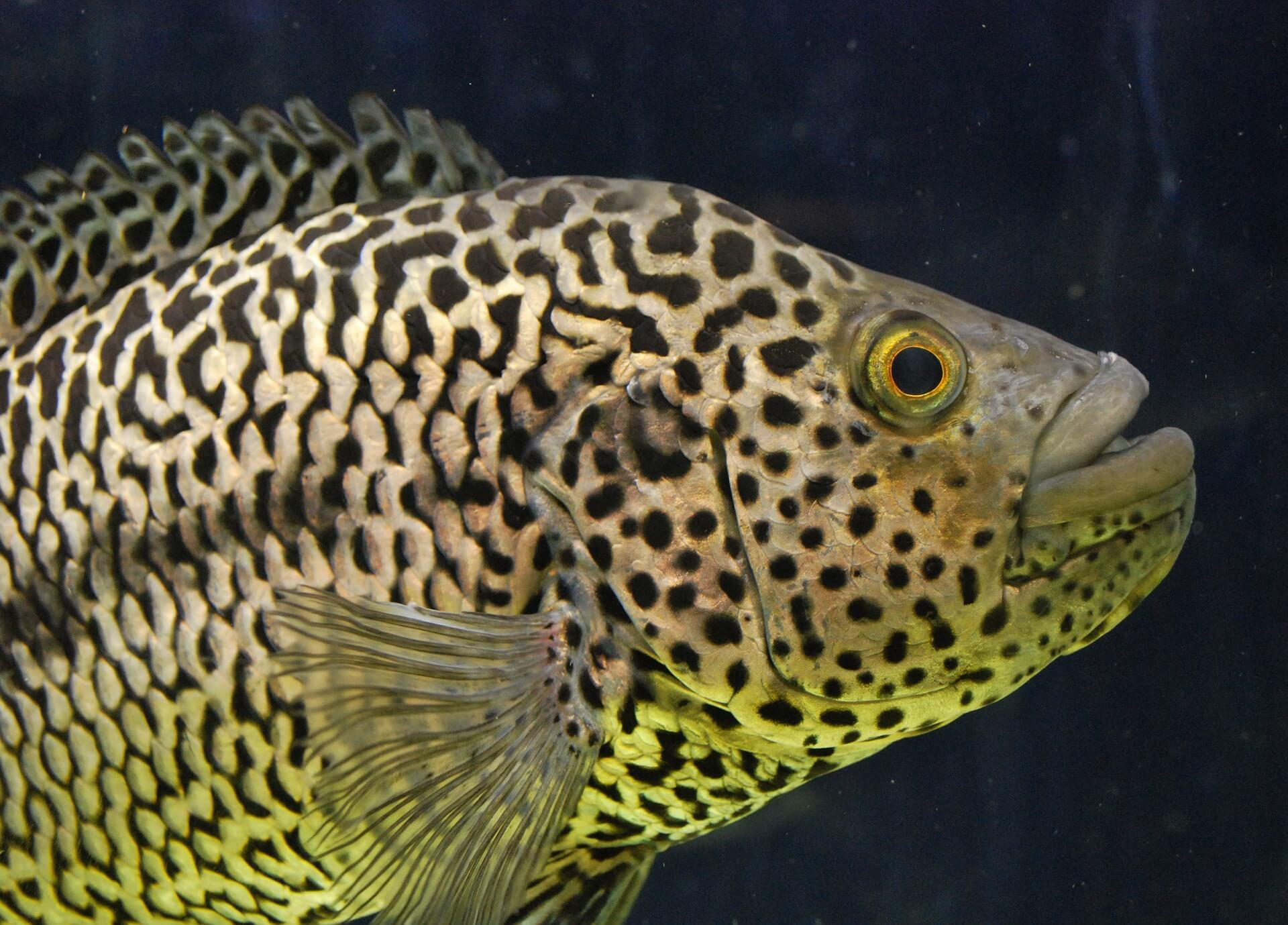 8 Facts That Prove Fish Are Intelligent And Feel Pain