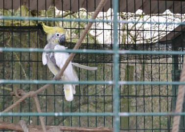 'The Primates Looked Depressed' – Visitors Slam Nottinghamshire Zoo