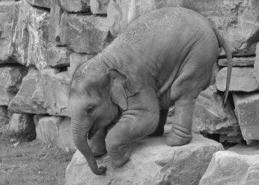 Video: Baby Elephants Abused at German Zoo