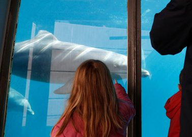 Zoo Lobbyists Trying to Fight France's Orca-Breeding Ban