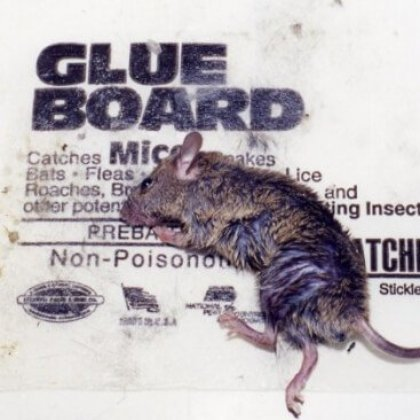 What to Do if You See Someone Selling or Using Glue Traps