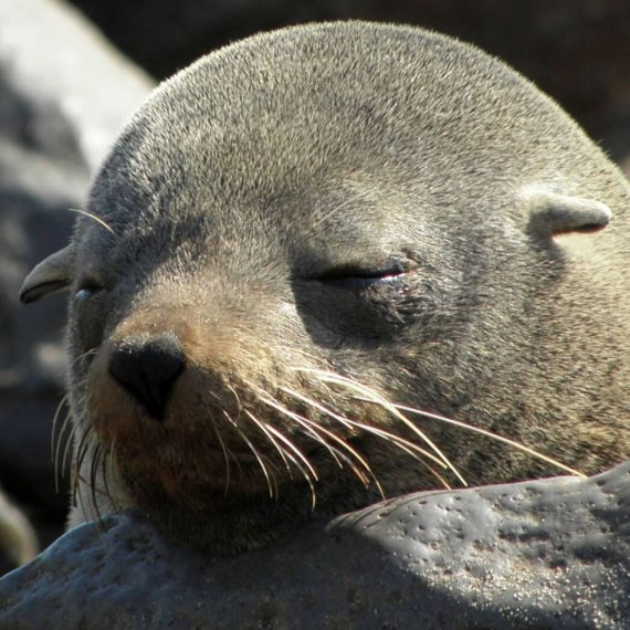 Baby Seals Are Being Clubbed to Death in Namibia