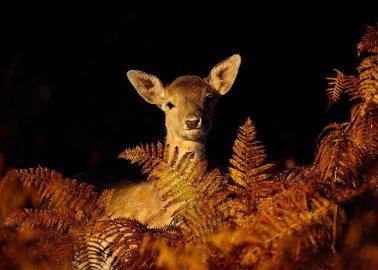BBC Photographer Pledges Percentage of Profits to Help Animals