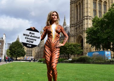 'Tiger' Joanna Krupa Visits Westminster to Call for Ban on Wild-Animal Circuses