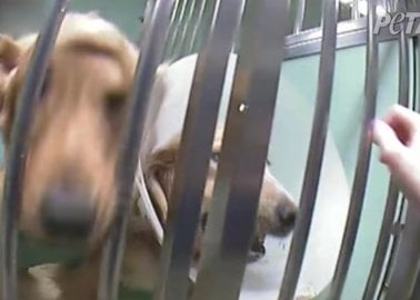 Muscular Dystrophy Patient Wants Funding for Cruel Dog Experiments to End