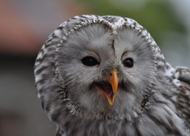 Victory! No More Owls Will Be Used on 'Harry Potter' Tours