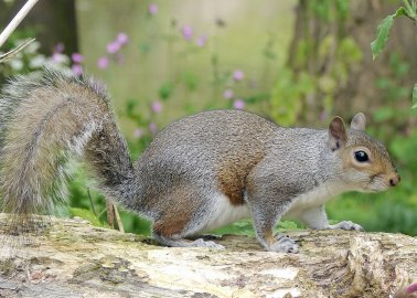 ITV Asks, 'Would You Ever Consider Eating Squirrel?' Viewers Vote No